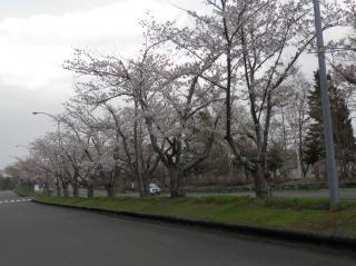 戸田記念墓園2