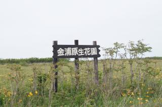 金浦原生花園1