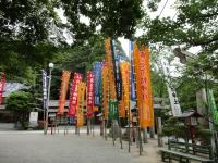 宮地嶽神社 菖蒲まつり
