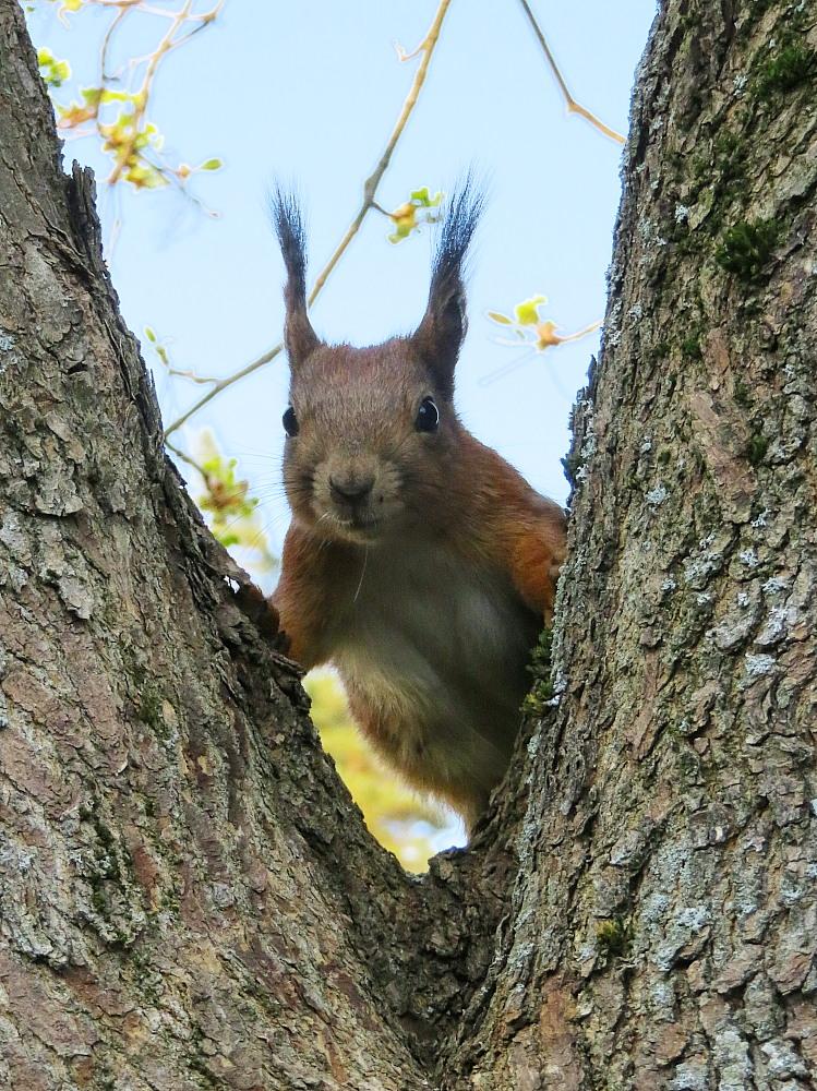 フィンランド 庭の訪問者 リス かわいい Orava