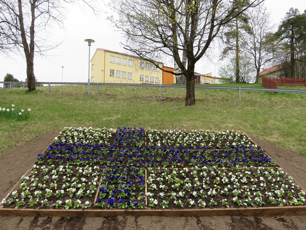 フィンランド 春 国旗の花壇