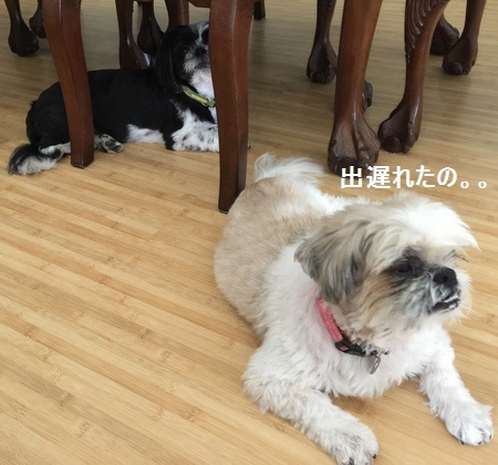 IMG_8921moji.jpg
