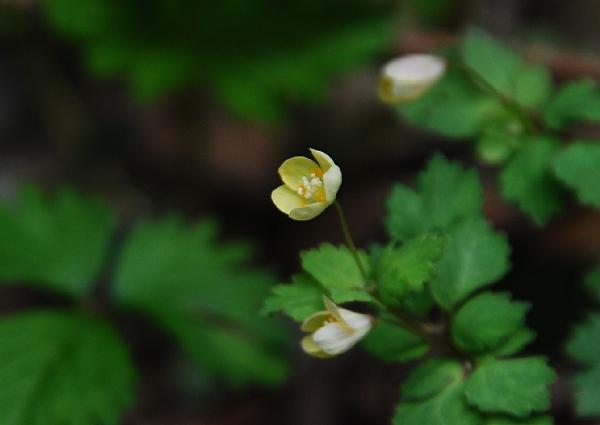 tougokusabanoo04291.jpg