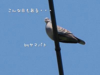 th_IMG_2253.jpg