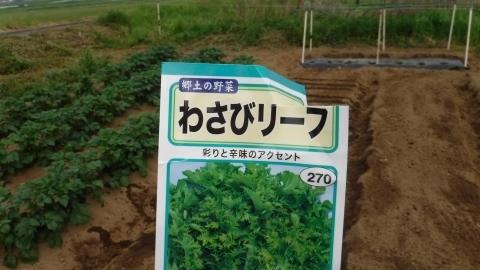 2017.5.2菜園20