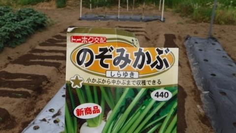 2017.5.7菜園11
