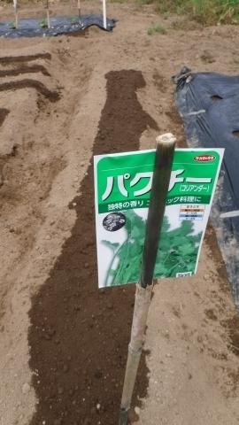 2017.5.7菜園16