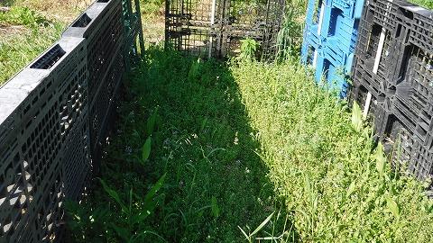 2017.5.20菜園4