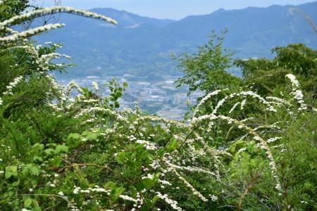 頂上キイシモツケDSC_0577