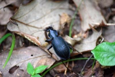 笹の道昆虫DSC_0618