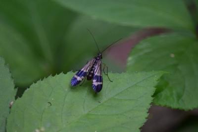 笹の道昆虫DSC_0630