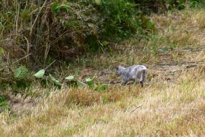 堤防動物_055DSC_0055猫