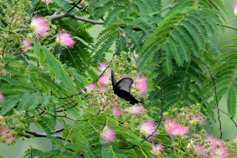 堤防昆虫_039DSC_0380蝶