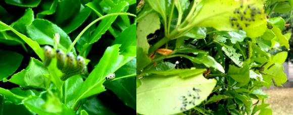 虫食い-3