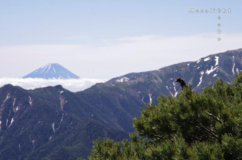富士山とライチョウ