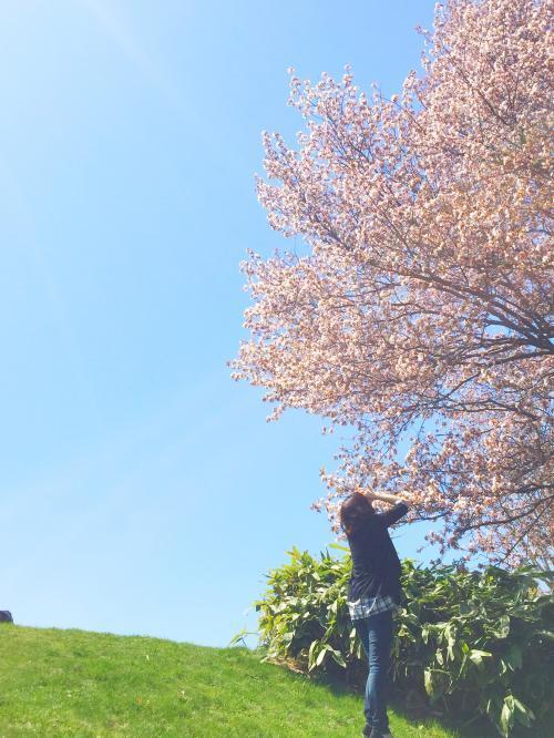 桜と海 3