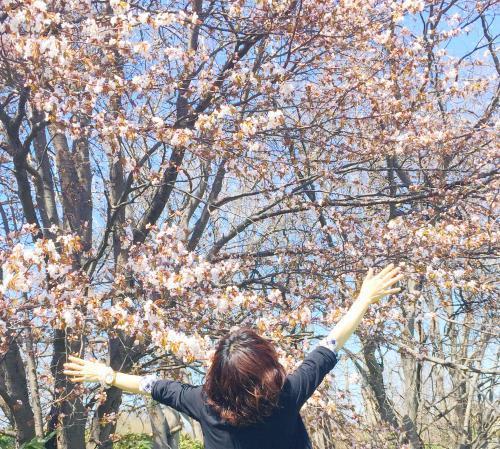 桜と海 2