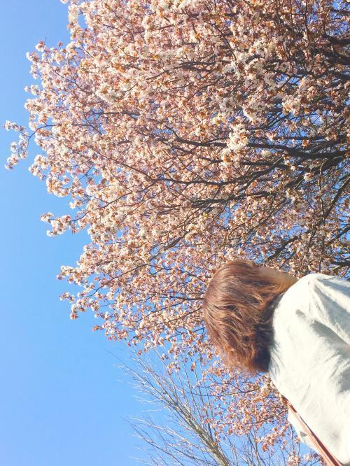 桜と海 4