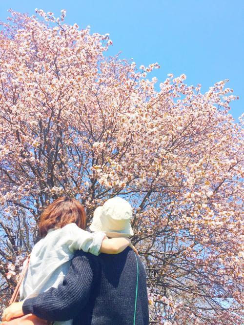 桜と海 5