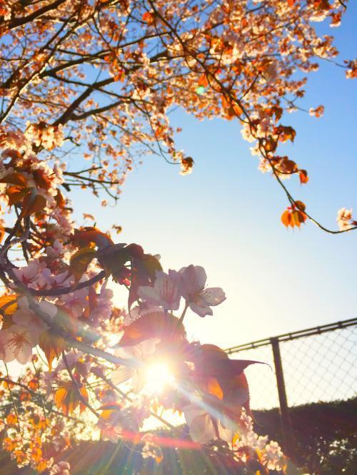 桜と海 9