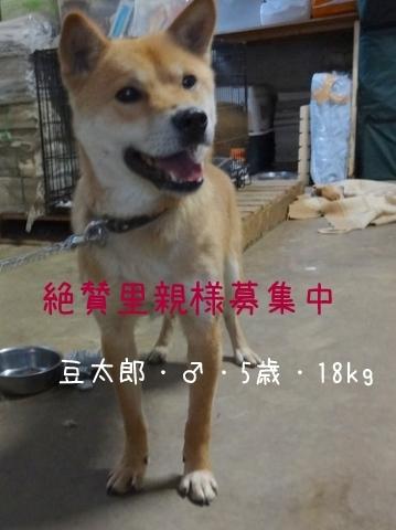 豆太郎2-1