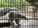 2017061009旭山動物園06