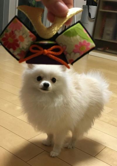 米太郎 兜