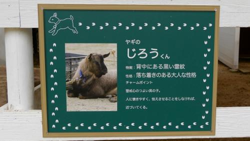 nojima170503-4