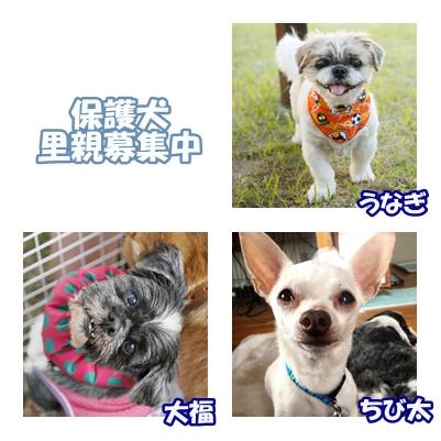 cats_2017061304281193f.jpg