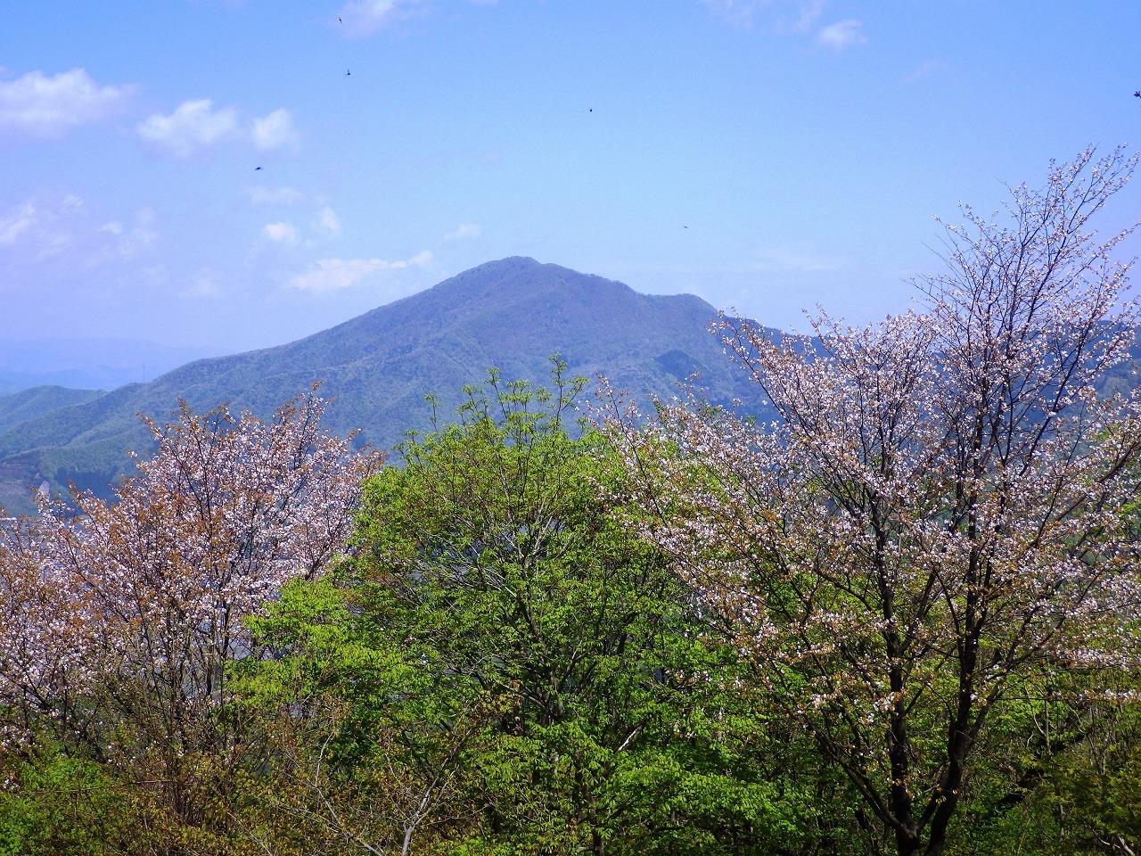 日野山と桜