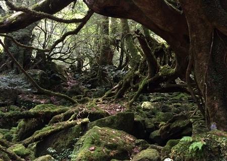 白谷雲水峡4苔むす森