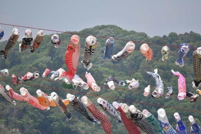 相模川鯉のぼり20170400000003