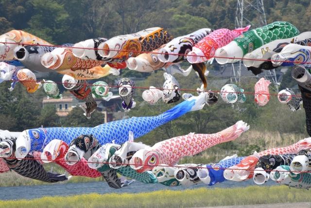 相模川鯉のぼり20170400000009