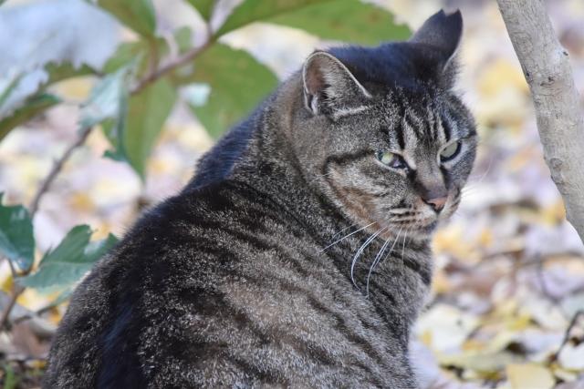 寝ふてふて猫201612300000008