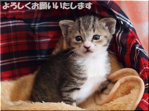 20170514お知らせ
