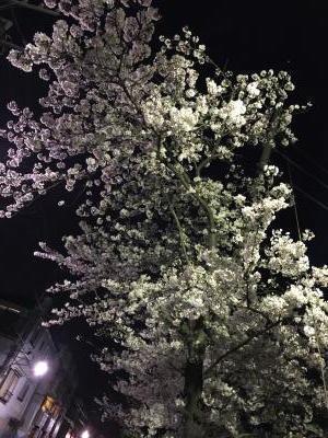 2017.4.10夜桜2