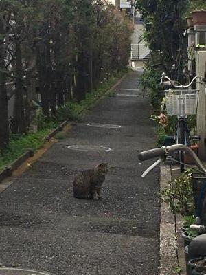 2017.4.22猫1