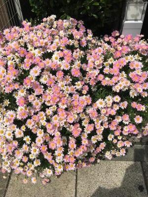 2017.5.3flower