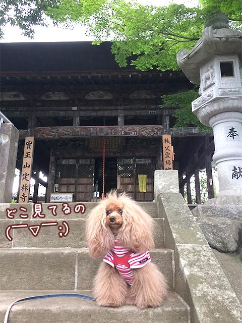 20170517_kobouzu.jpg