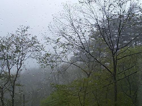 久しぶりの雨の日1