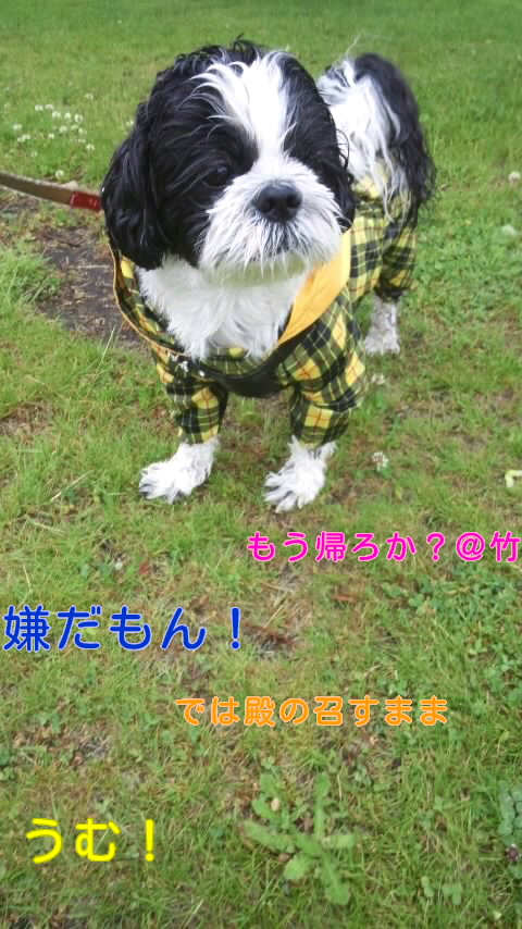 moblog_77f20b98.jpg