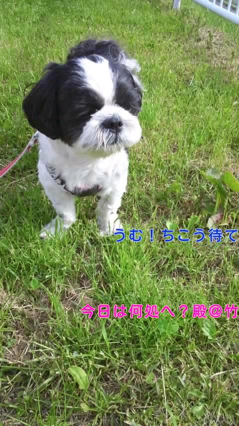 moblog_e164625e.jpg