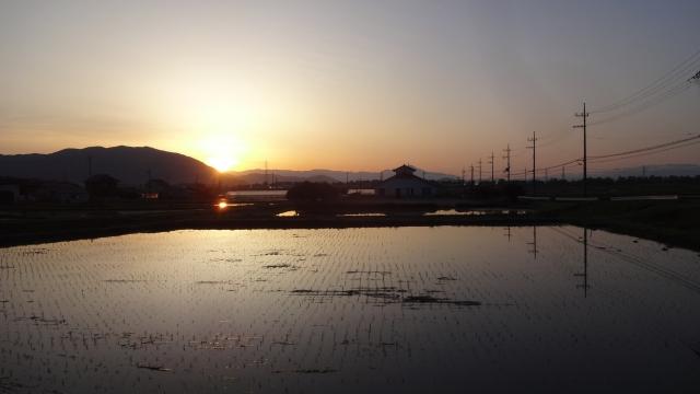 マキノの田園と朝日