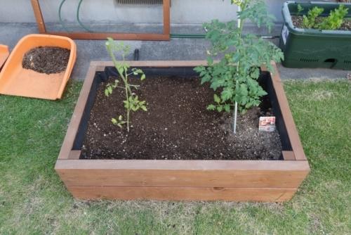 トマト レイズドベッド