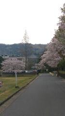 桜越しに見える大仏殿の屋根