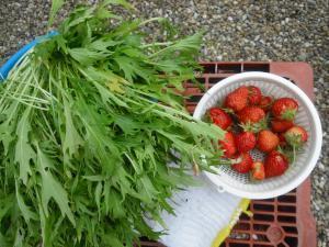 6-3収穫