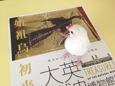 daieishizenshi1_.jpg