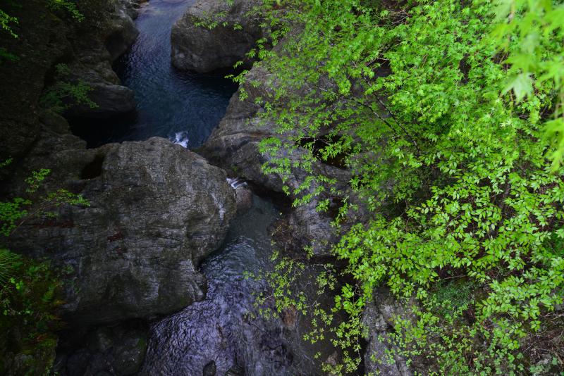 「新緑の渓谷2」   (徳島県上勝町殿川内渓谷)