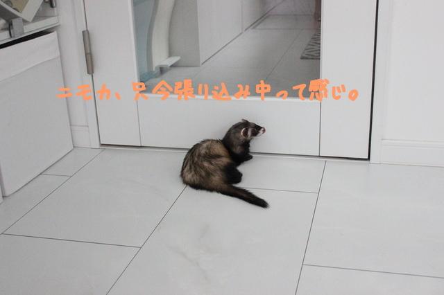 43HChgzNS7RT22F1498819935_1498820300.jpg