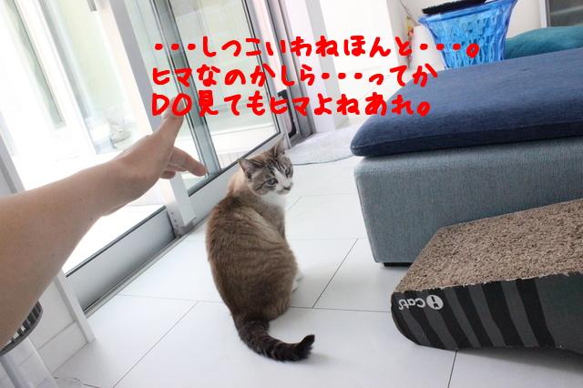 wZt3Ug_1kvZ3pm51498606760_1498606817.jpg